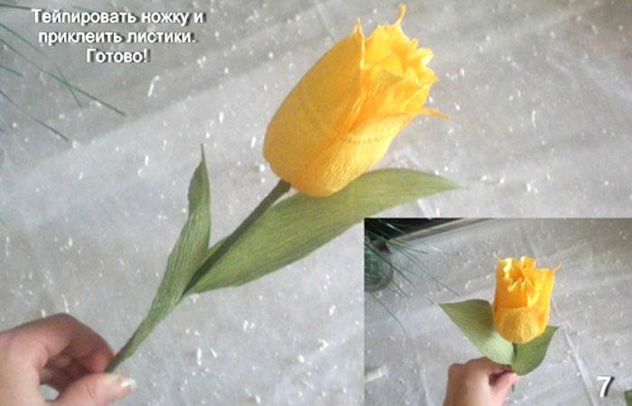 Тюльпаны и гофрированной бумаги своими руками мастер класс